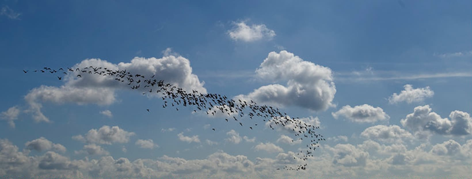 What's the Key to Cloud Migration? A Little Birdy Told Us
